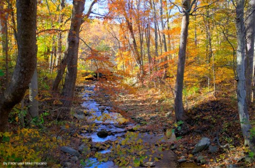 Catoctin Furnace Trail