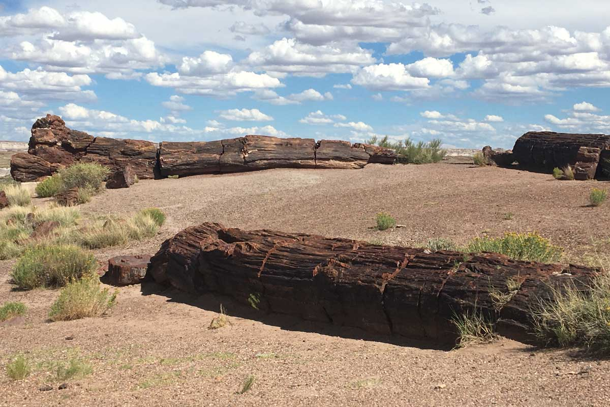 Petrified logs at Petrified Forest National Park, Arizona